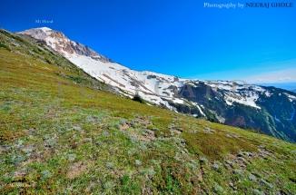 mt hood mcneil point peak oregon timberline trail #600 postcard