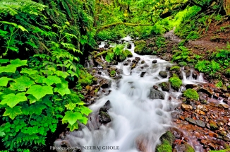 wahkeena falls trail columbia river gorge lemmon's viewpoint portland oregon postcard