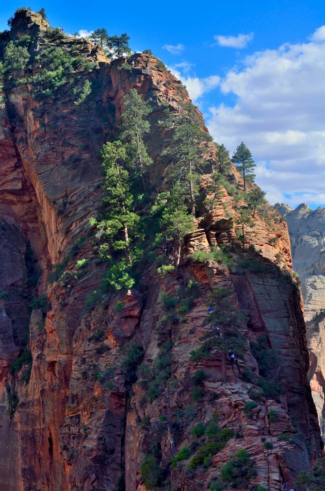 angels landing zion national park utah sandstone valley summit hike trail west rim trail grotto bus stop #6 springdale